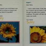 Diary of a Sunflower